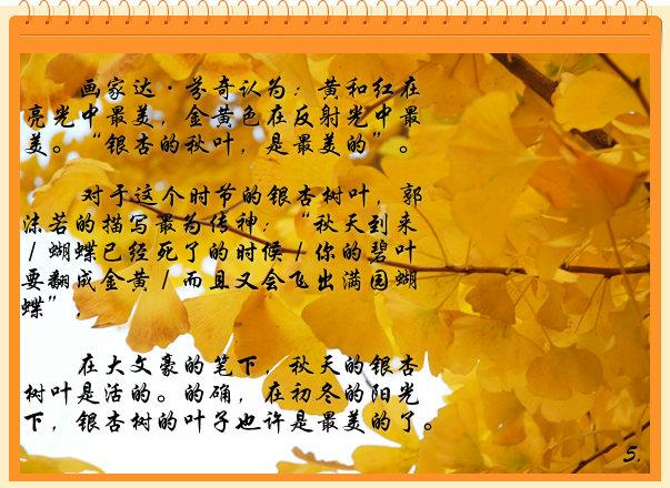 """对于这个时节的银杏树叶,郭沫若的描写最为传神:""""秋天到来/蝴蝶已"""