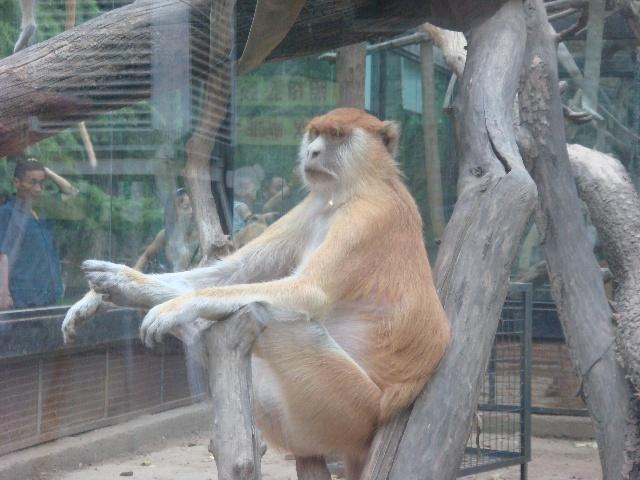 游动物园 连环画》