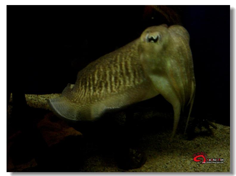 飞越太平洋(37)-千奇百怪的海洋生物