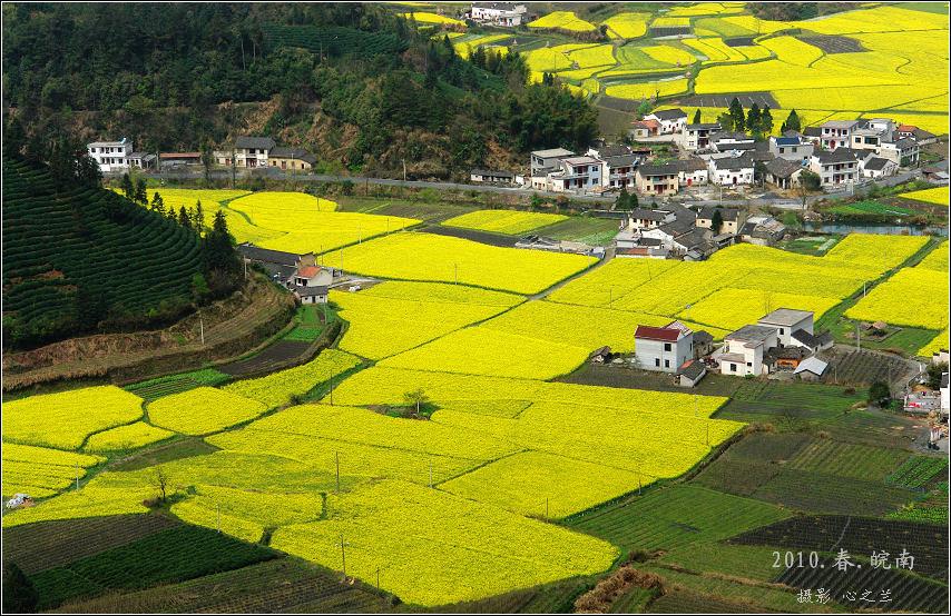 三月的柯村乡是遍地菜花黄,风景美如画.
