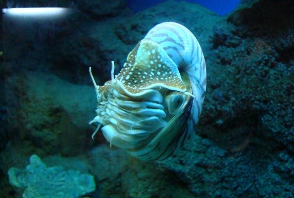 壁纸 海底 海底世界 海洋馆 水族馆 574_388
