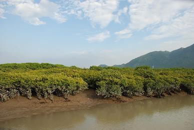 竹塔红树林-岁月苔藓-搜狐博客