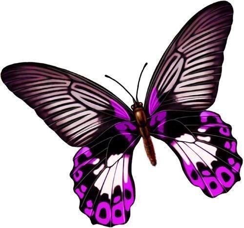 幼儿园窗户蝴蝶