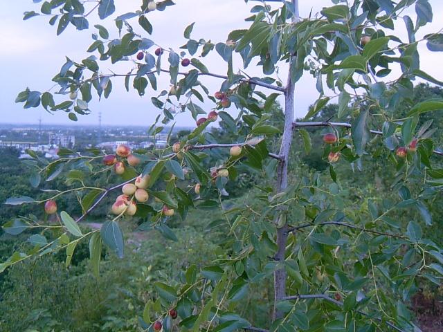 目之所及皆果树,和柚子一样挂满累累硕果的还有各种桔子树,枣树,柿子