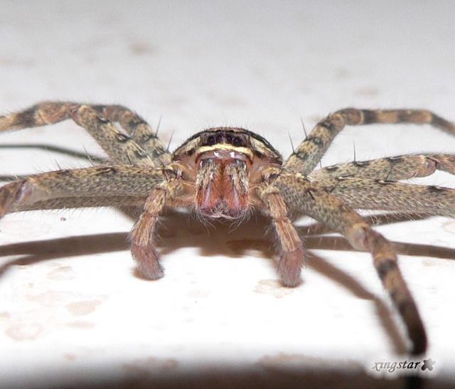 蜘蛛吃虫子简笔画