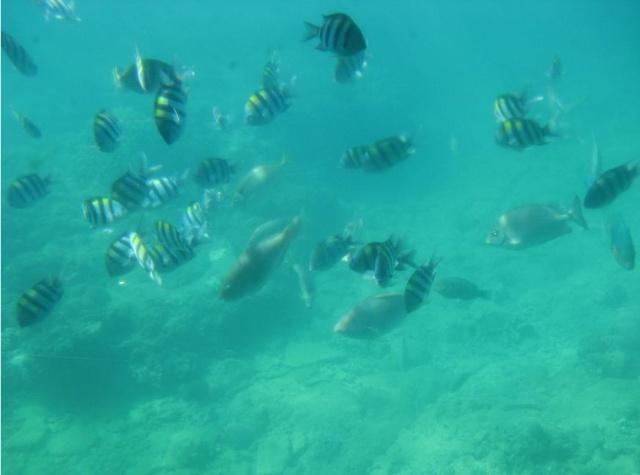 海底的鱼群
