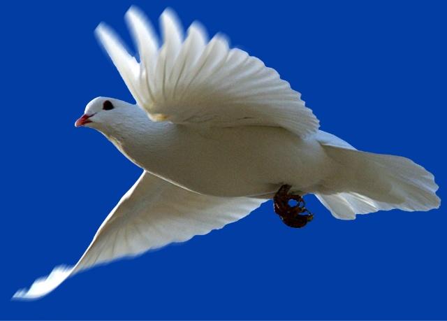 圣灵 属性对门徒的意义 haliluya