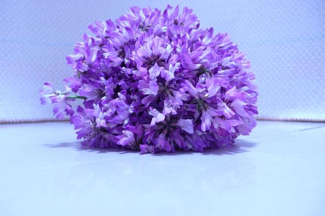 小时候这种紫紫的小花会开满春天的田野,一大片一大片,很喜欢,现在很