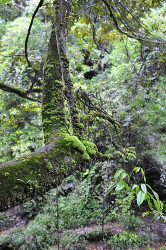 壁纸 风景 森林 桌面 333_500 竖版 竖屏 手机