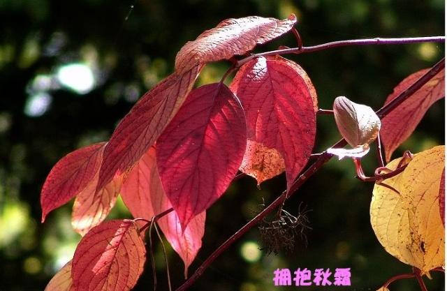 秋霜落叶风景的图片