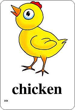 动物的英语单词大全