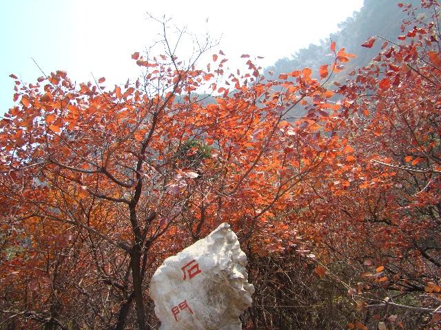 壁纸 枫叶 风景 红枫 树 640_480