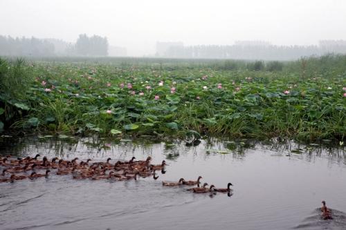 而微山岛位于微山湖中,四面环水,东西长6公里